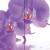 Орхидея фотопечать